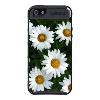 Daisy ( WestCreek) Skinit Phone case