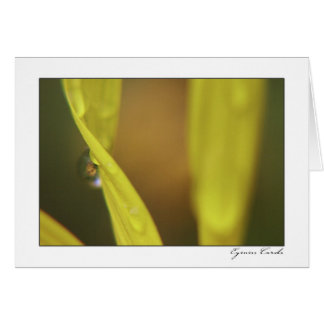 Daisy with a Dew Drop Greeting Card