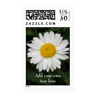 Daisy with rain drops Postage Stamp