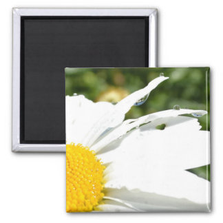 Daisy with Water Drops 2 Inch Square Magnet