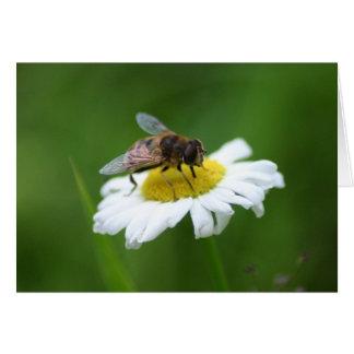 daisybee 2 card