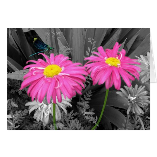 Daisys and Dragonflys Greeting Card