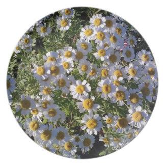 Daisys Plate