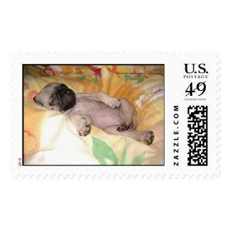 Daizzzzzy Postage Stamp