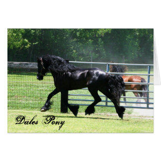 Dales Pony trotting card