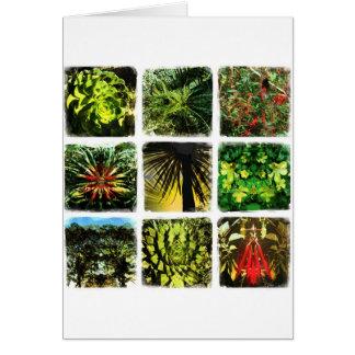 Dali Plants Cards