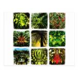 Dali Plants Postcard