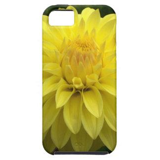 Dalia amarilla en productos múltiples iPhone 5 carcasas