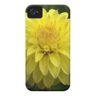 Dalia amarilla en productos múltiples iPhone 4 funda