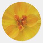 Dalia amarilla pegatinas redondas