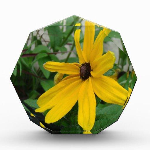 Dalia amarilla soleada