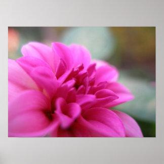 Dalia de las rosas fuertes poster