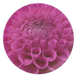 Dalia púrpura del panal en productos múltiples plato