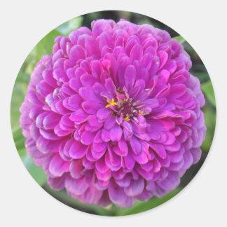 Dalia púrpura pegatina redonda
