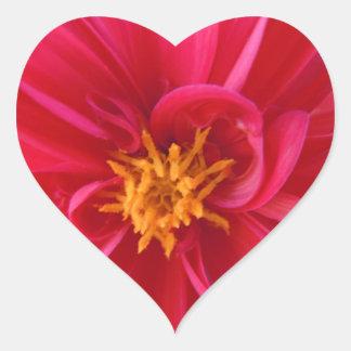 Dalia roja bonita pegatina en forma de corazón