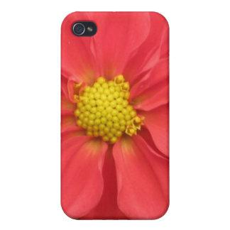 Dalia roja iPhone 4 protectores