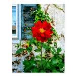 Dalia roja por la ventana postal