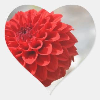 Dalia roja salvaje pegatina en forma de corazón
