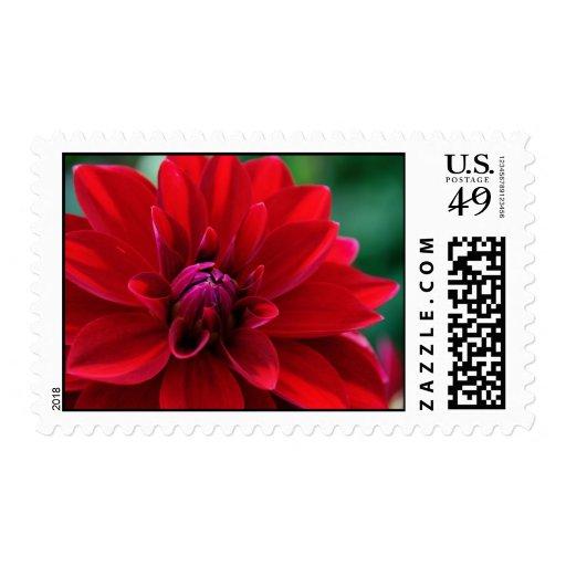 Dalia roja sello