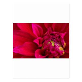 Dalia roja tarjetas postales