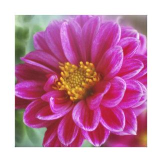 Dalia rosada del corazón impresión en lona estirada