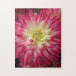 Dalia rosada puzzles con fotos