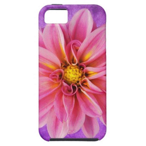 dalia rosada y púrpura en fondo pintado a mano funda para iPhone SE/5/5s