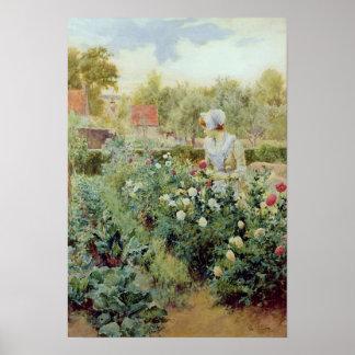 Dalias 1896 posters
