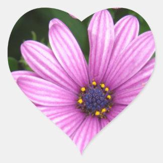 Dalias púrpuras pegatina en forma de corazón