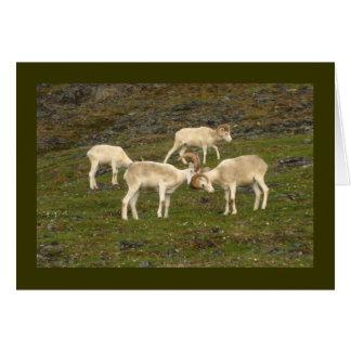 Dall Sheep Card