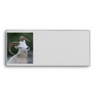 Dall Sheep Envelope