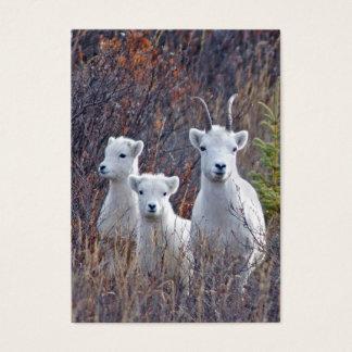 Dall Sheep Ewe with Lambs Wildlife Guide Card
