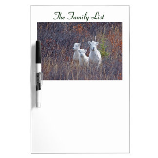 Dall Sheep Family - Denali National Park Dry-Erase Whiteboard
