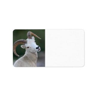 Dall Sheep Label