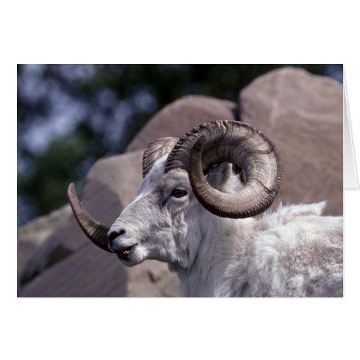 Dall sheep (Large ram) Greeting Card