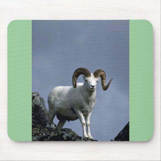 Dall sheep (Large ram) Mouse Pad