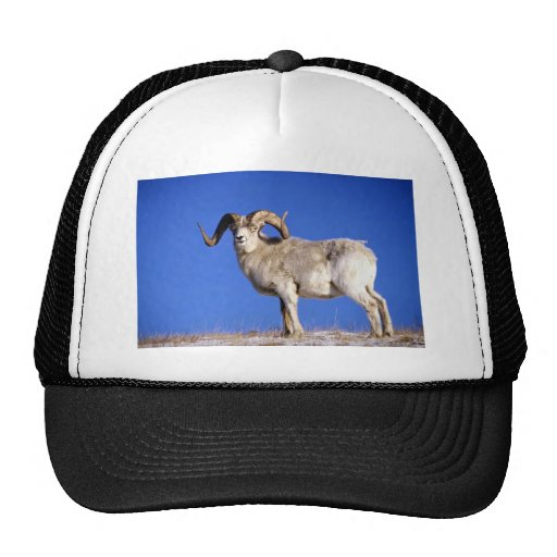 Dall sheep (Large ram on snowy skyline) Trucker Hats