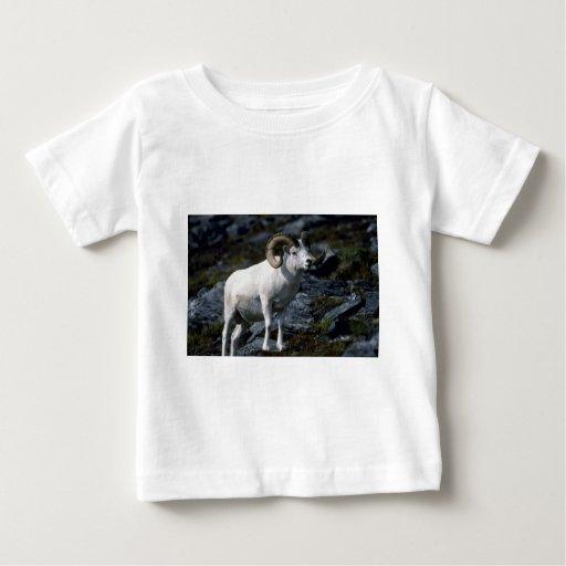 Dall sheep (Large ram) T Shirt