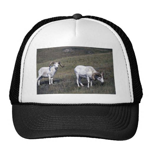 Dall sheep (Large rams in alpine pasture) Mesh Hats