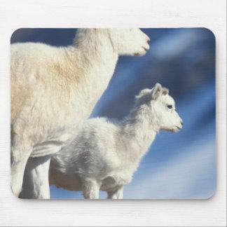 dall sheep, Ovis dalli, ewe and lamb on a Mouse Pad