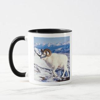 dall sheep, Ovis dalli, full curl ram on a 2 Mug