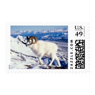 dall sheep, Ovis dalli, full curl ram on a 2 Postage