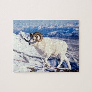 dall sheep, Ovis dalli, full curl ram on a 2 Puzzle