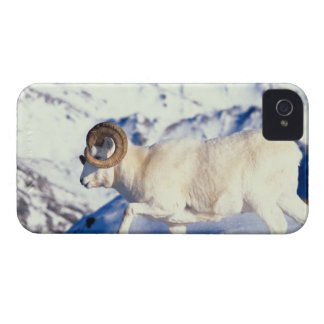 dall sheep, Ovis dalli, full curl ram on a iPhone 4 Case-Mate Case