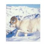 dall sheep, Ovis dalli, full curl ram on a Note Pad