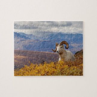 dall sheep, Ovis dalli, ram resting on a Jigsaw Puzzles