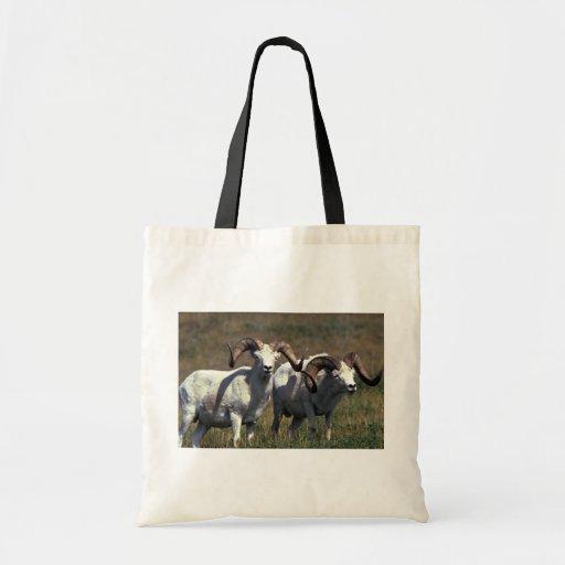 Dall Sheep-pair of big rams Bags