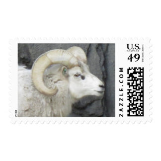Dall Sheep Postage Stamp
