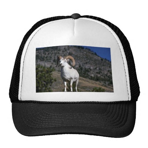 Dall sheep (Ram alert on mountain crest) Hat