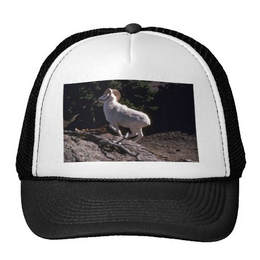 Dall sheep (Ram running acroos mountainside) Trucker Hat